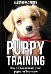 Puppy Training – how to housetrain your puppy effectively