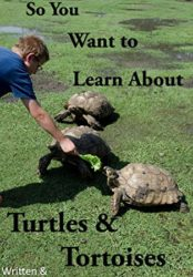 So You Want to Learn About Turtles & Tortoises